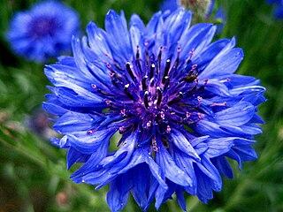 Blue flower motif