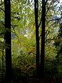 Badínsky prales.JPG