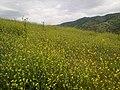 Bahar allahın süslü halısı - panoramio.jpg