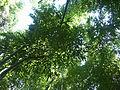 Bambous vue du sol.jpg