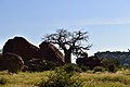 Baobab and landscape, Mapungubwe, Limpopo, South Africa (20543841555).jpg