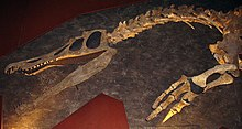 Skeletal dinosaur head, neck and arm, with jaws open