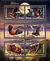 Bats Romania 2003.jpg