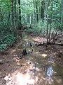 Battle Creek Cypress Swamp 38.jpg