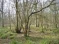 Battlelake wood - geograph.org.uk - 358074.jpg