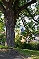 Baum Erdhausen.jpg