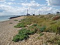Beach at Shoreham Harbour - geograph.org.uk - 36784.jpg