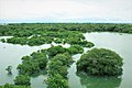 Beautiful bangladesh Raatargul 5.jpg