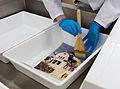 Besuch Kölner Dreigestirn im Historischen Archiv der Stadt Köln -9719.jpg