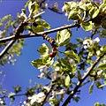 Biedronka liście ladybird.jpg