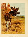 Big game hunting for boys, North America and Asia (1907) (20361221142).jpg