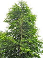 Bili Tree CM Farm Saldi.jpg