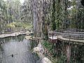 Bird Park in Kuala Lumpur (Malaysia) (35).jpg