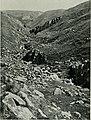 Bird notes (1908) (14768407753).jpg