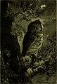 Bird stories (1903) (14726871076).jpg