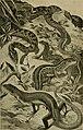 Blätter für Aquarien- und Terrarien-Kunde (1895) (20392734331).jpg