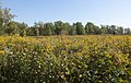 Blacklick Woods Meadows 2.jpg