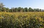Blacklick Woods Meadows 2.jpg