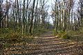 Bleier Wald Stammersdorf 04.jpg