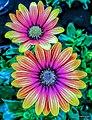Blumen .jpg