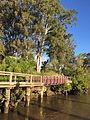 Boardwalk along Brisbane River at Sherwood Arboretum 04.JPG