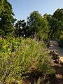 Bordeaux Jardin Public Vue n°1.jpg