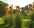 Botanička bašta Jevremovac, Beograd - jesenje boje, svetlost i senke 41.jpg