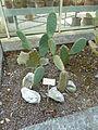 BotanicGardensPisa (107).JPG