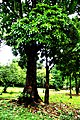 Botanic garden limbe73.jpg