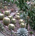 Botanická zahrada Liberec (18) - Kaktusy.jpg