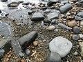 Boulders and Pyrite, Charmouth Beach.jpg