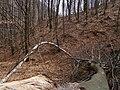 Brána do lesa - panoramio.jpg