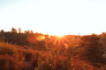 BrachterWald bei Sonnenaufgang09.png