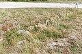 Bretagne - Finistère - de Plouescat à Cléder - Four à Goémon - 002.jpg