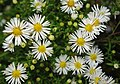 Brickfield Flowers - geograph.org.uk - 2115775.jpg