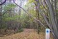 Bridleway in Blean Wood (2) - geograph.org.uk - 1559200.jpg