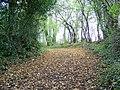 Bridleway near Longburton - geograph.org.uk - 1567688.jpg