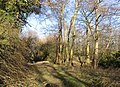 Bridleway to Freegreen Farm - geograph.org.uk - 328564.jpg