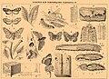 Brockhaus and Efron Encyclopedic Dictionary b4 610-4.jpg