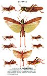 Brockhaus and Efron Encyclopedic Dictionary b56 402-0.jpg