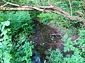Brook entering the marsh at Slapton - May 2015 - panoramio.jpg