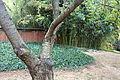 Brooklyn Botanic Garden - DSC07894.JPG