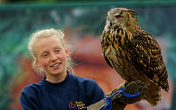 Bubo bubo -British Wildlife Centre, Surrey, England -zoo keeper-8a (1).jpg