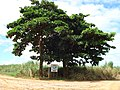 Buritana - Entrada para Tilapia do Brasil (clique na foto) - panoramio.jpg