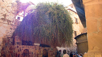 Burning bush - The bush at Saint Catherine's Monastery in the Sinai Peninsula, which monastic tradition identifies as being the burning bush.