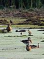 Busy Pond (7642018164).jpg