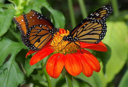 Butterflies UFmuseum