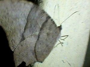 Butterfly0144.jpg