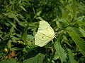 Butterfly232.JPG