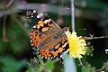 Butterfly (3903529717).jpg